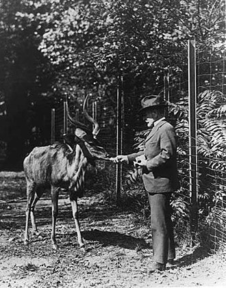 Bronx Zoo - Zoo Director William T. Hornaday feeding a greater kudu in 1920