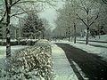 Winter Light Glottertal - Mythos Black Forest Photography - panoramio (17).jpg