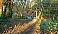 Winter sun, Crawfordsburn Country Park - geograph.org.uk - 1160784.jpg