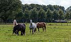 Winterswijk (NL), Korenburgerveen -- 2014 -- 3075.jpg