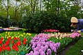 Wiosenny ogród Keukenhof w Lisse-Holandia. - panoramio (3).jpg
