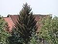 Witterda 1998-05-19 01.jpg