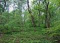 Woodland, Cressbrook Dale. - geograph.org.uk - 1310072.jpg