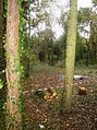 Woodland management in Mill Copse - geograph.org.uk - 601010.jpg