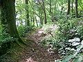 Woodland path near Awliscombe - geograph.org.uk - 1379499.jpg