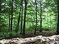 Woods alongside A436 - geograph.org.uk - 181344.jpg