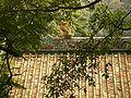 WuXianGuan-pavillion-roof-0508.jpg