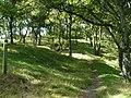 Wye Valley Walk - geograph.org.uk - 553006.jpg