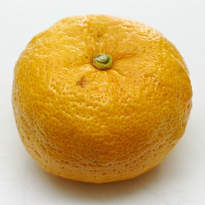 English: A large ripe Japanese Yuzu hybrid cit...
