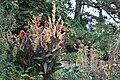 Zürich - Alter Botanischer Garten IMG 0674.JPG
