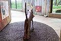 ZSL London - Leaping tiger sculpture (03).jpg