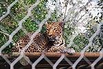 Zoo de Lisboa by Juntas 76.jpg