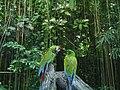Zwei Papageien.JPG