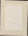 Zygaena blochii - kop - 1700-1880 - Print - Iconographia Zoologica - Special Collections University of Amsterdam - UBA01 IZ14100047.tif