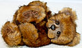 """Jasper"" by Sharron Roe Bears of Eastwood (6259703168).jpg"