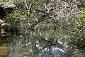 (1)Buffalo Creek-2.jpg