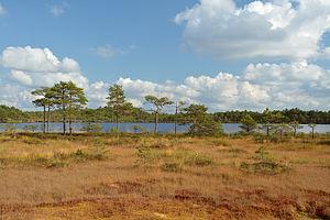 Soomaa National Park - Ördi bog.