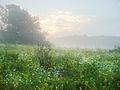 Балка Пестрая в тумане 02.jpg