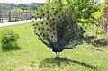 Бердянский зоопарк 102.jpg