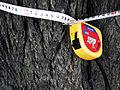 Вікове дерево груші 05.JPG