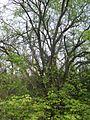 Дендрологічний парк 237.jpg
