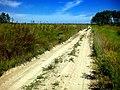 Дорога у полі - panoramio.jpg