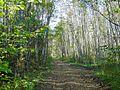Дорожка meža celiņš - panoramio.jpg
