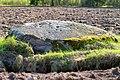 За́балацкі камень з лункамі.jpg