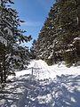 Зимний лес - panoramio (5).jpg