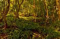 Колхидский лес.jpg