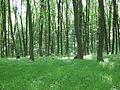 Медобори, у лісі.JPG