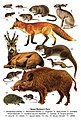 Млекопитающие Великого Луга.jpg