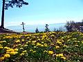 Одуванчиковое поле и вид Байкала.jpg