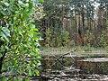 Озеро-болото - panoramio.jpg