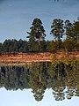 Озеро Святе. Острів з старими соснами.jpg
