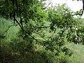 Парк шума Гази Баба во мај (118).JPG