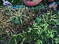 Плотоядные растения. Субтропический маршрут.jpg