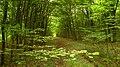 Река Трионска, резерват Тисовица 06.JPG