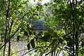 Река ворона - panoramio.jpg