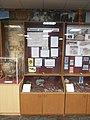 Саргатские артефакты (музей ТюмГУ) 02.JPG