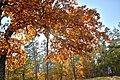 Сяйво осені в Пущі Водиці.jpg