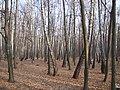 Украина, Киев - Голосеевский лес 252.JPG