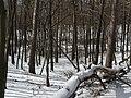 Украина, Киев - Голосеевский лес 27.jpg