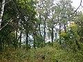 Усадьба Петровское, парк с прудами 01.jpg