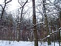 Чернечий Ліс 24.jpg