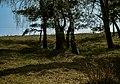 Юрівський Збір березового соку DSC 0525.jpg