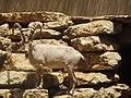 יעל נובי במתחם הפרסתנים.jpg