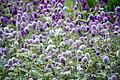 عکس از گلها و گیاهان باغ بوتانیکال تفلیس - گرجستان 10.jpg