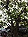 古樹掩映下的普濟禪寺 - panoramio.jpg