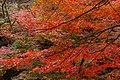 御船山楽園の紅葉 - panoramio.jpg